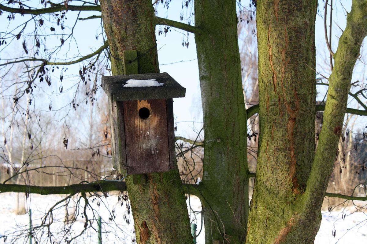 freeze_birdhouse