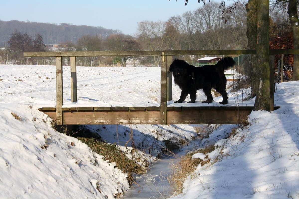 freeze_bridge
