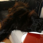 10 Life Lessons I've Learned from Our Newfie