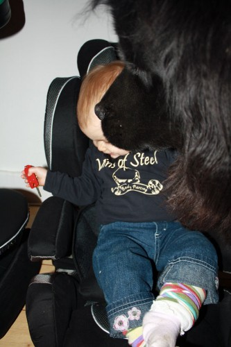 Mackenzie Ayla kiddy comfort pro car seat 04