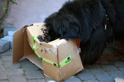 dogs cardboard boxes