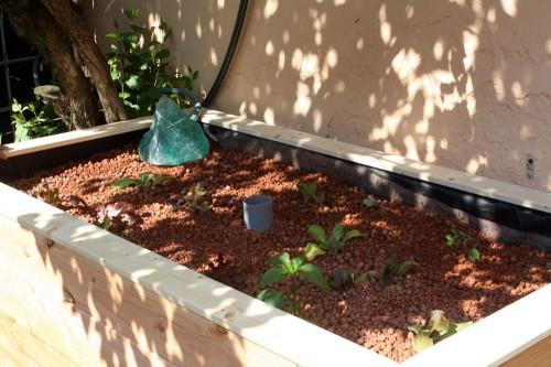 aquaponics grow bed