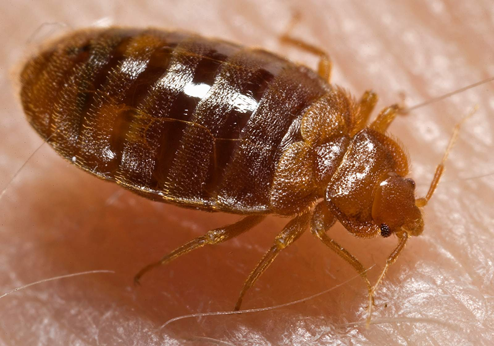 How To Get Rid Of Red Bugs Naturally