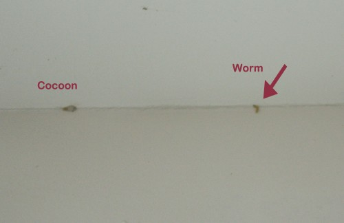 Overcoming A Pantry Moth Plague No
