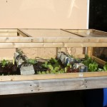 How to build a cold frame for the salad table