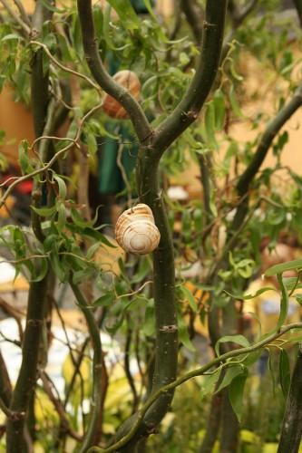 rudesheim snail shells