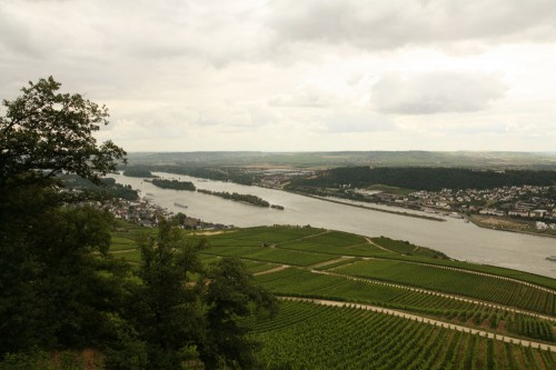 rudesheim winefields