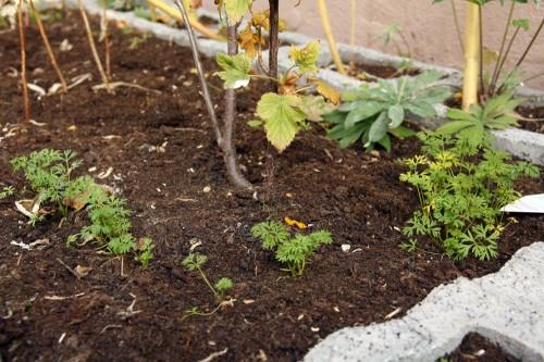 garden linky