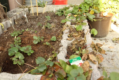 garden link up
