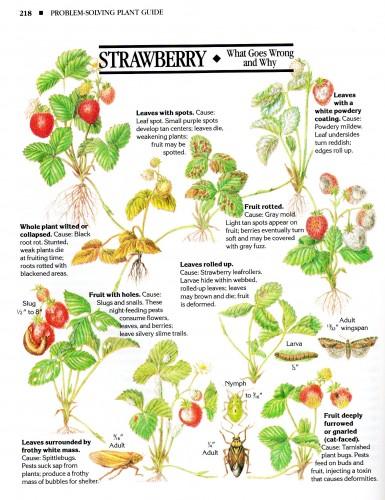 organic remedies strawberries
