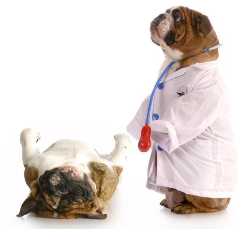 Image result for Dogs health
