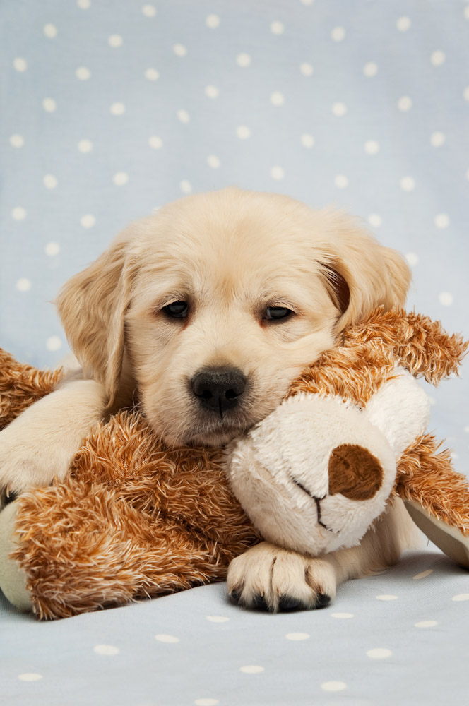 WW: 10 reasons to think twice about a new puppy