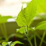 {Garden Life} Get off my seedlings!