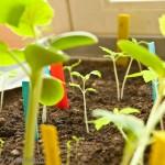 {Garden Life} 1-2-3 Grow!