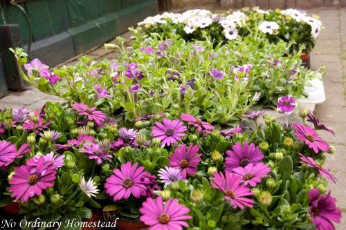 garden life linky