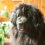 12 Things We've Learned About Owning A Newfie