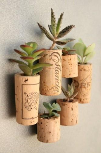 cork-succulents