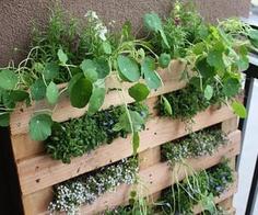 garden-pallet
