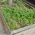 {Garden Life} Guerrilla gardening in Berlin