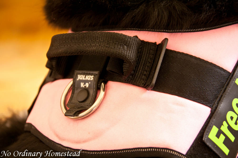 My Indestructible Harness Ayla S Thoughts No Ordinary Homestead