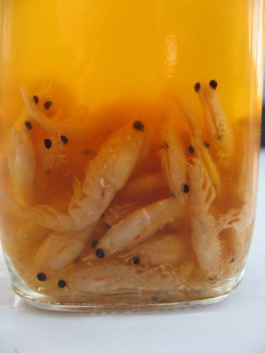 krill-jar