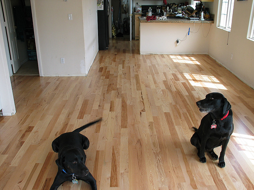 you're ruining your hardwood floor – how to avoid further damage
