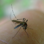 How to Mosquito-Proof Your Home