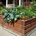 7 Raised Garden Tricks Everyone Should Know