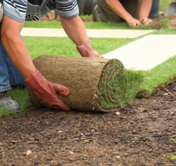 roll-out-turf