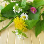 How Weeds Are Benefiting Your Garden
