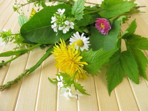 Bouquet of wild herbs