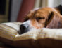 Vet-Recommended Orthopedic Dog Beds Could Change Your Dog's Life