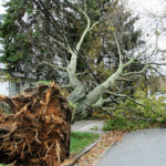 When Wild Winds Blow: Tips and Tools to Prepare You for Hurricane Season