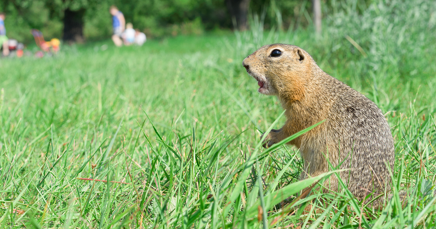 4 Tips for Keeping Gophers Out of Your Backyard Garden This Summer