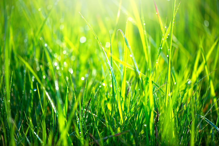 3 Basic Lawn Care Tips To Live By
