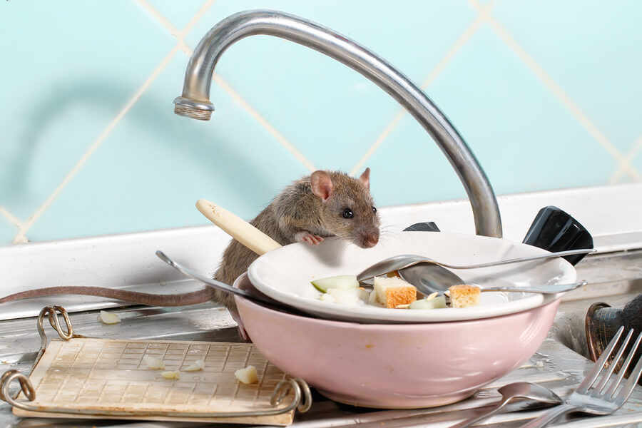 How to Keep Rodents and Their Health Risks Out of Your Home