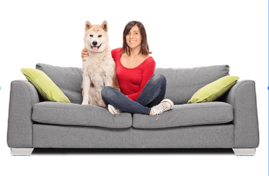 Pooch-Friendly Furniture: Where to Find It and How to Protect It