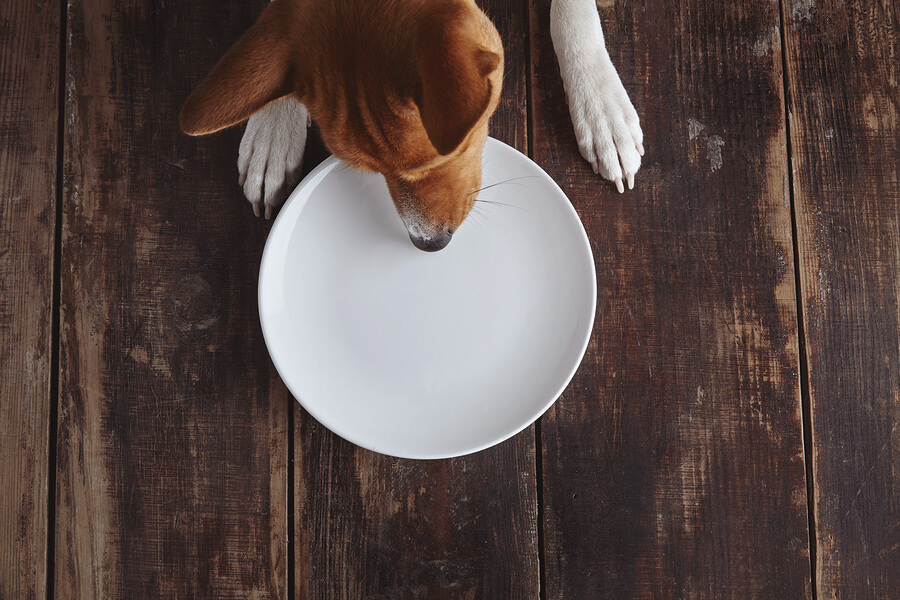 6 Things You Should Be Adding to Your Dog's Diet