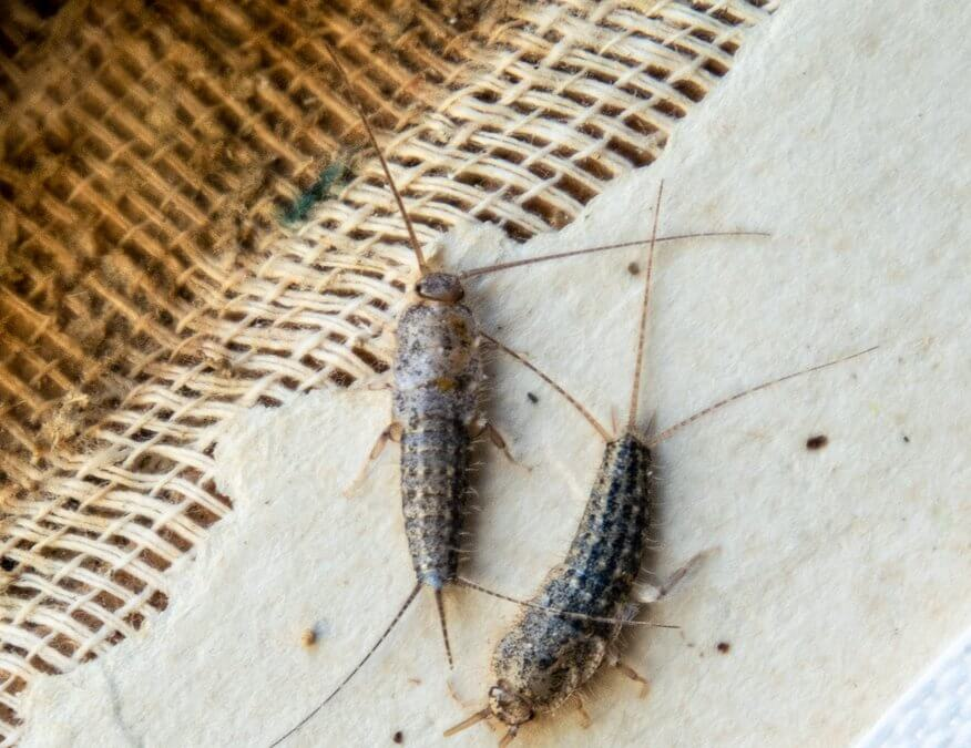 How to Get Rid of Silverfish In Your Garden